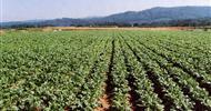 L'Agricoltura Naturale