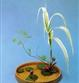 Ikebana Sanguetsu